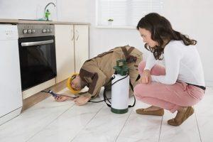 knock em out pest control exterminator services 300x200 - Dedetização em Jundiaí