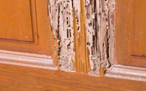 Termite Damage 862x539 1 300x188 - Controle de Cupins em Jundiaí