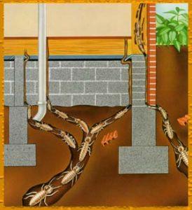 cupim grafico 274x300 - Dedetizadora de Cupins em Jundiaí