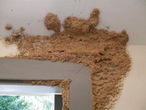 termites 1 007 2 300x225 - Dedetizadora de Cupins em Jundiaí