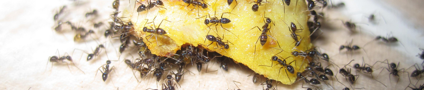 Sl5 - Dedetizadora de formigas em Jundiaí