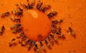 download 4 - Dedetizadora de formigas em Jundiaí